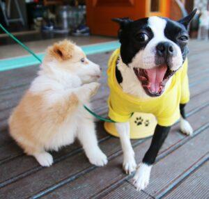 hundvänliga restauranger i malmö